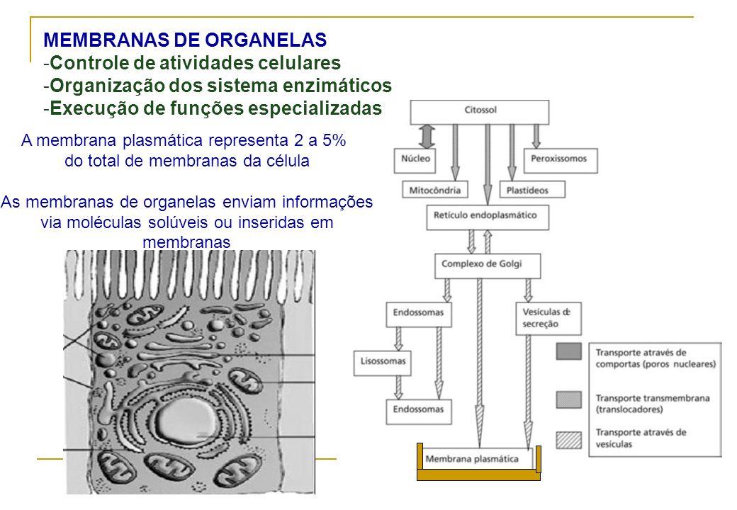 MEMBRANAS DE ORGANELAS -Controle de atividades celulares -Organização dos sistema enzimáticos -Execução de funções especializadas A membrana plasmátic