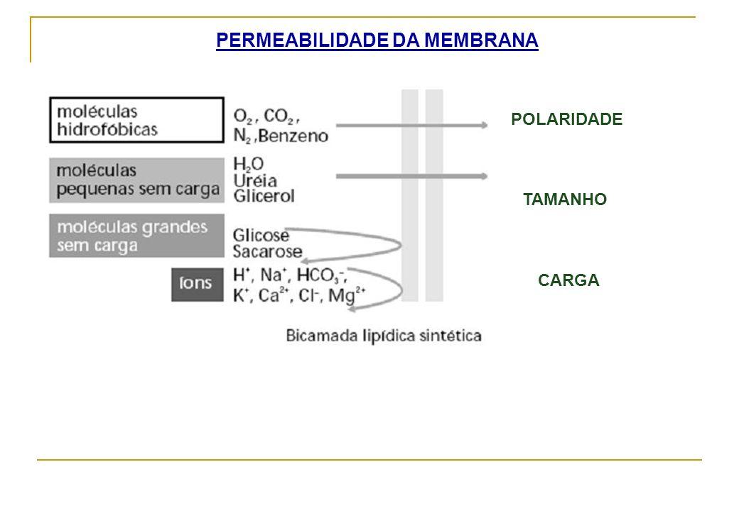 PERMEABILIDADE DA MEMBRANA TAMANHO POLARIDADE CARGA
