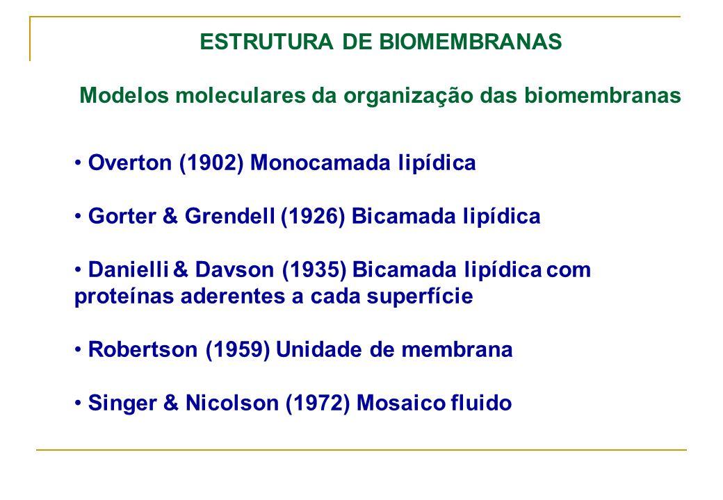 ESTRUTURA DE BIOMEMBRANAS Modelos moleculares da organização das biomembranas Overton (1902) Monocamada lipídica Gorter & Grendell (1926) Bicamada lip