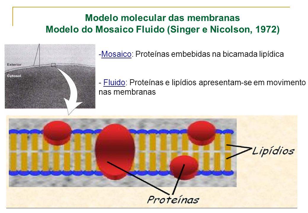 Modelo molecular das membranas Modelo do Mosaico Fluido (Singer e Nicolson, 1972) -Mosaico: Proteínas embebidas na bicamada lipídica - Fluido: Proteín