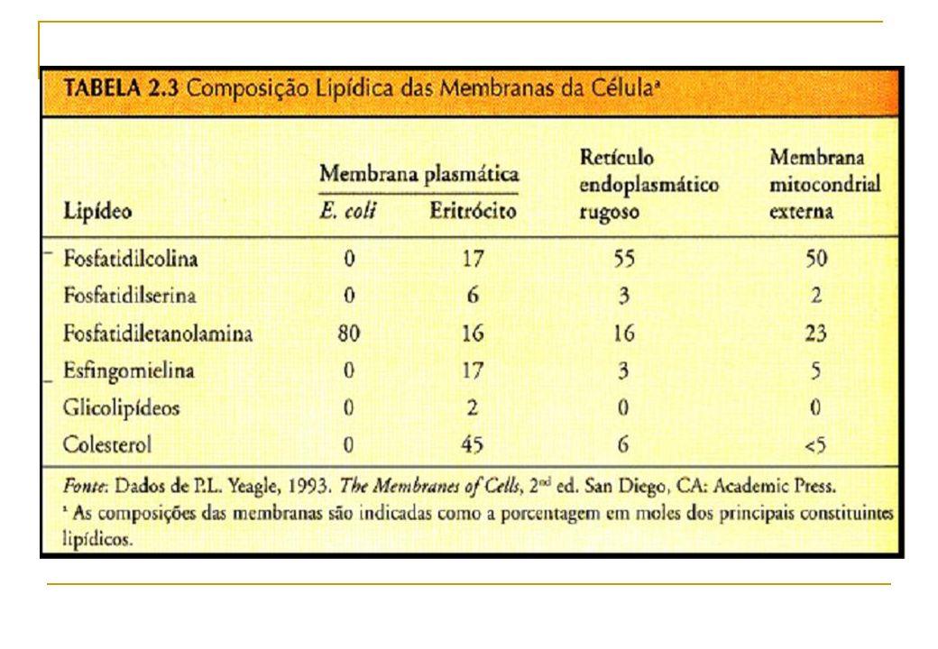 FOSFOLIPÍDIOS – Um dos principais constituintes de biomembranas