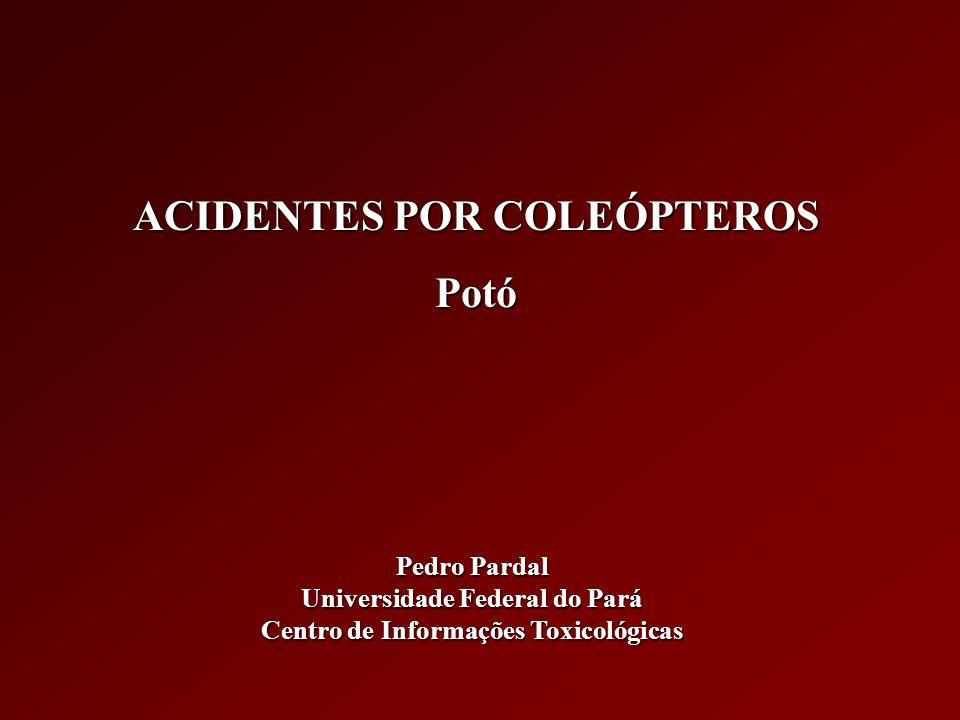 COLEÓPTEROS DE IMPORTÂNCIA MÉDICA NO BRASIL Paederus (Potó, trepa-moleque, fogo-selvagem, péla-água) P.