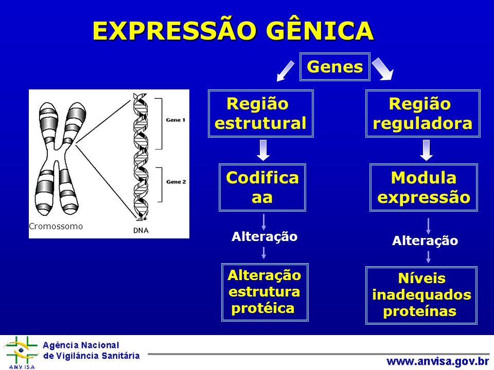 Região estrutural Região reguladora Codifica aa Modula expressão Genes Alteração Níveis inadequados proteínas Cromossomo Alteração estrutura protéica
