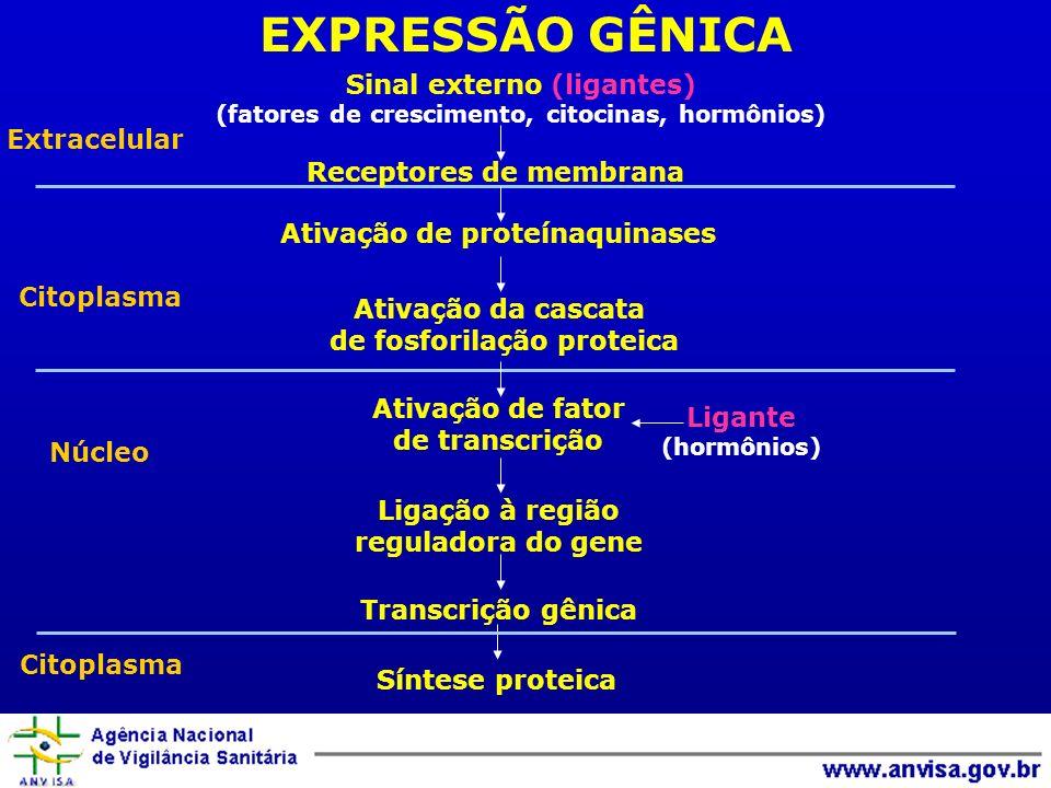 EXPRESSÃO GÊNICA Extracelular Citoplasma Núcleo Sinal externo (ligantes) (fatores de crescimento, citocinas, hormônios) Receptores de membrana Ativaçã