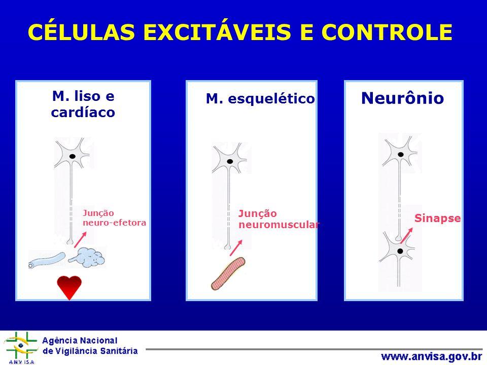CÉLULAS EXCITÁVEIS E CONTROLE Junção neuromuscular Sinapse Junção neuro-efetora M. liso e cardíaco M. esquelético Neurônio
