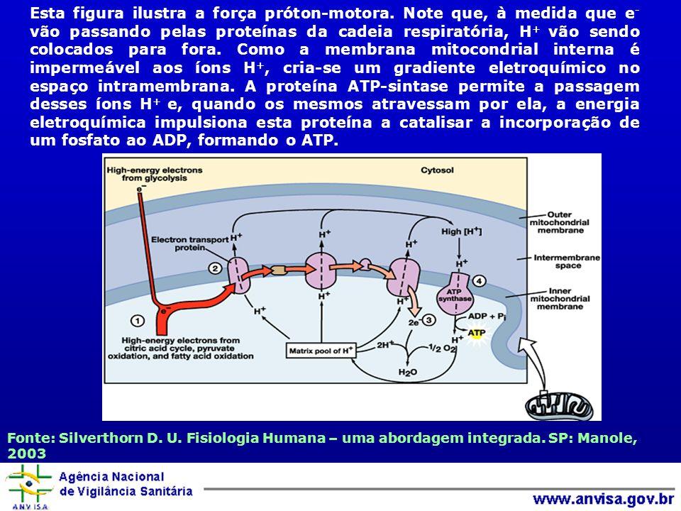 Esta figura ilustra a força próton-motora. Note que, à medida que e - vão passando pelas proteínas da cadeia respiratória, H + vão sendo colocados par