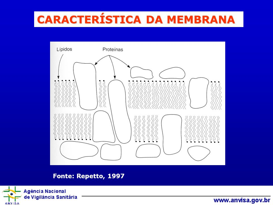 Fonte: Repetto, 1997 CARACTERÍSTICA DA MEMBRANA