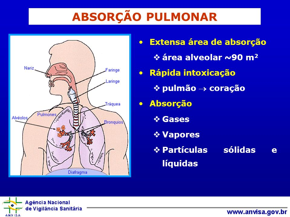 ABSORÇÃO PULMONAR Extensa área de absorção área alveolar ~90 m 2 Rápida intoxicação pulmão coração Absorção Gases Vapores Partículas sólidas e líquida