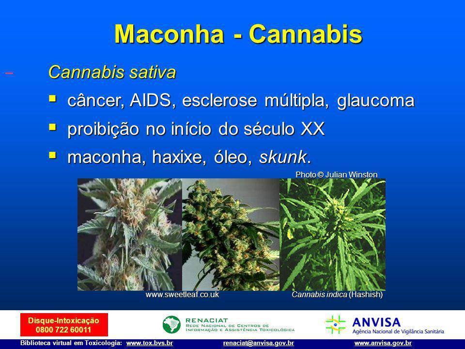 Disque-Intoxicação 0800 722 60011 Biblioteca virtual em Toxicologia: www.tox.bvs.brwww.anvisa.gov.brrenaciat@anvisa.gov.br Cannabis sativa câncer, AID