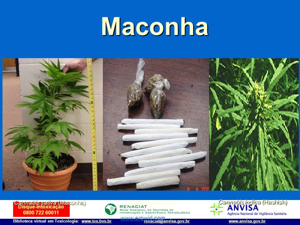 Disque-Intoxicação 0800 722 60011 Biblioteca virtual em Toxicologia: www.tox.bvs.brwww.anvisa.gov.brrenaciat@anvisa.gov.br Maconha Cannabis indica (Ha