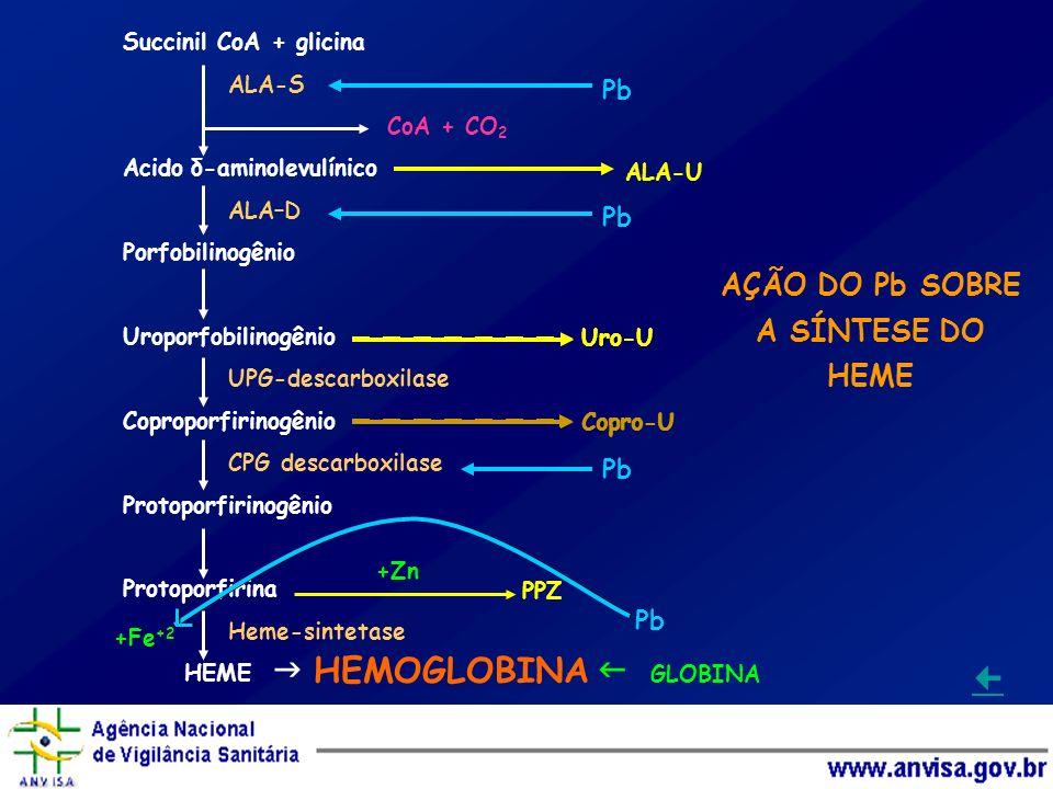 Succinil CoA + glicina ALA-S CoA + CO 2 Acido δ-aminolevulínico ALA–D Porfobilinogênio Uroporfobilinogênio UPG-descarboxilase Coproporfirinogênio CPG