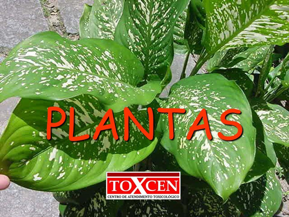 toxcen@saude.es.gov.br Ficus carica Anacardium occidentale Lantana camara Fitofotodermatose