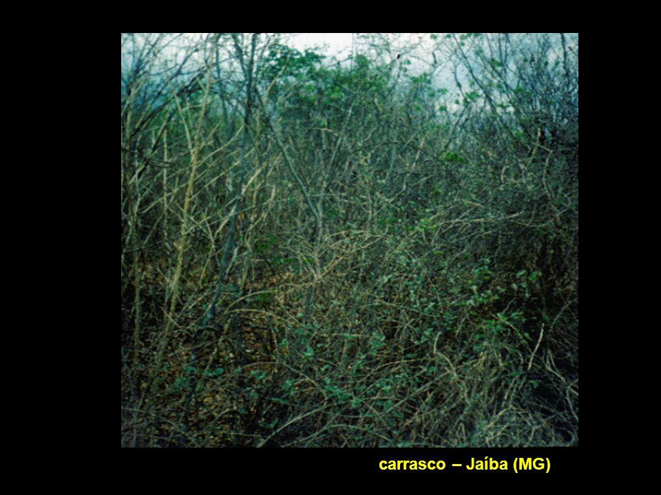 Carrasco – Jaíba (MG)