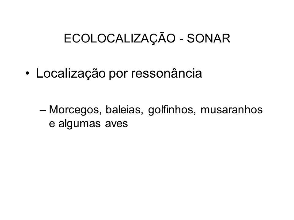 ECOLOCALIZAÇÃO - SONAR Localização por ressonância –Morcegos, baleias, golfinhos, musaranhos e algumas aves