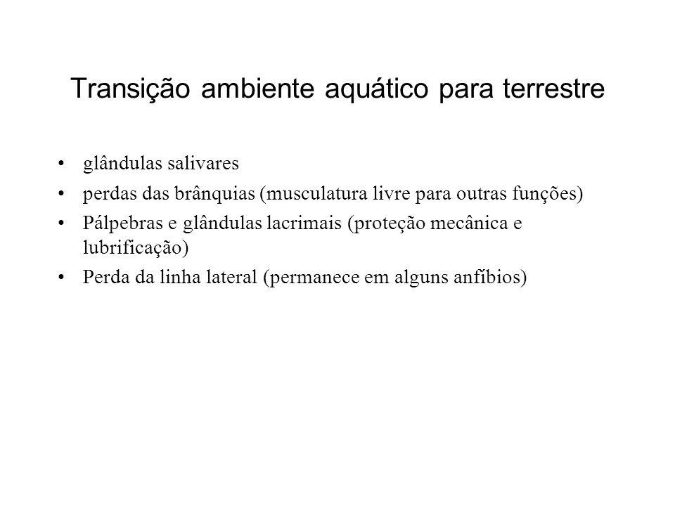 Transição ambiente aquático para terrestre glândulas salivares perdas das brânquias (musculatura livre para outras funções) Pálpebras e glândulas lacr