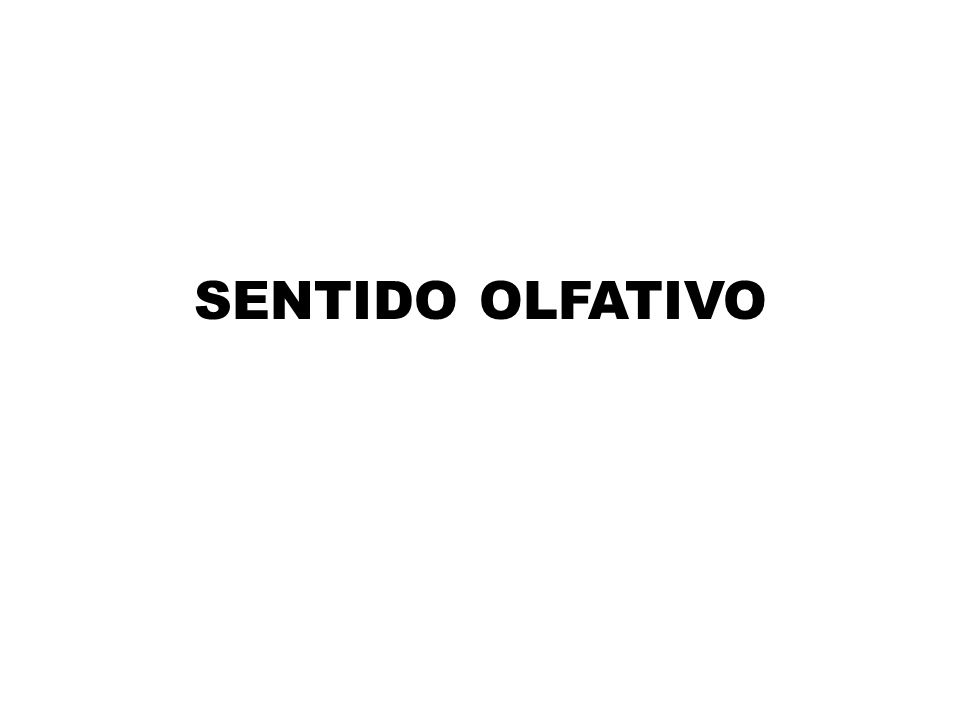 SENTIDO OLFATIVO