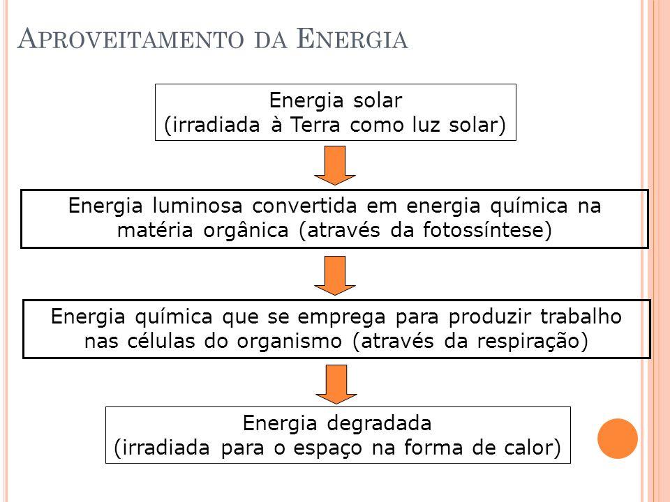 A PROVEITAMENTO DA E NERGIA Energia solar (irradiada à Terra como luz solar) Energia luminosa convertida em energia química na matéria orgânica (atrav