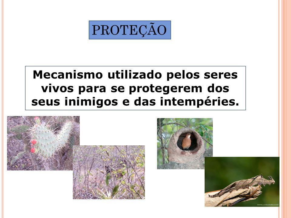 PROTEÇÃO Mecanismo utilizado pelos seres vivos para se protegerem dos seus inimigos e das intempéries.
