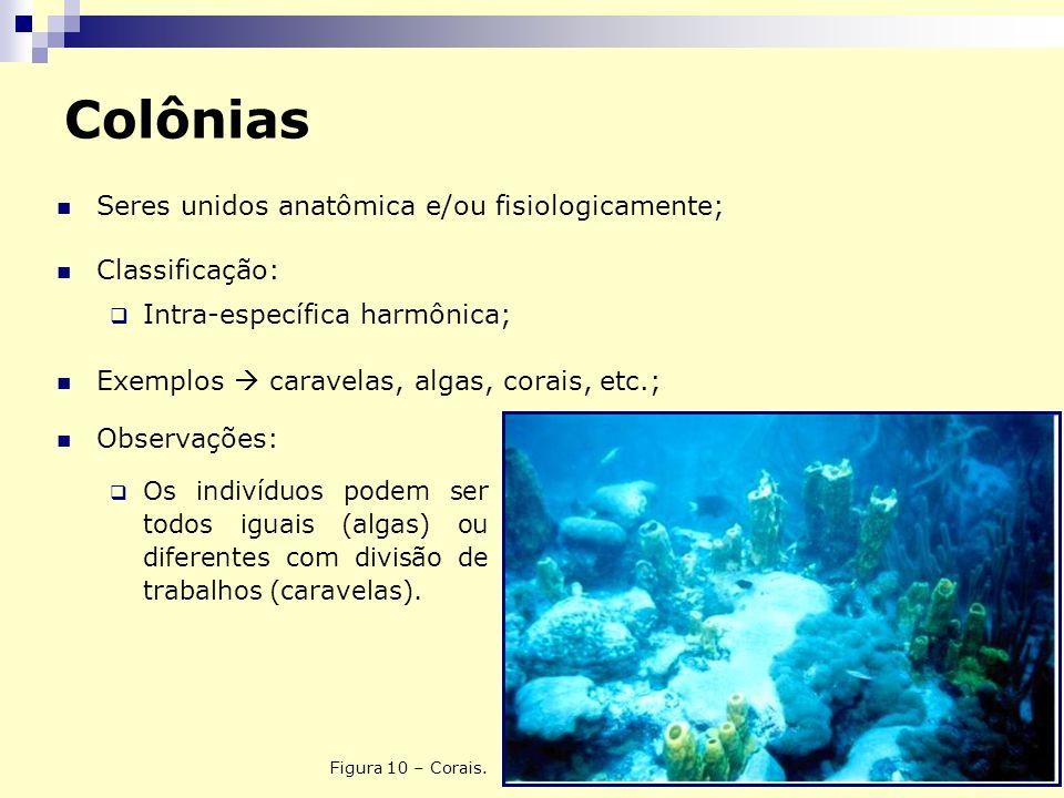 Colônias Seres unidos anatômica e/ou fisiologicamente; Classificação: Intra-específica harmônica; Exemplos caravelas, algas, corais, etc.; Figura 10 –