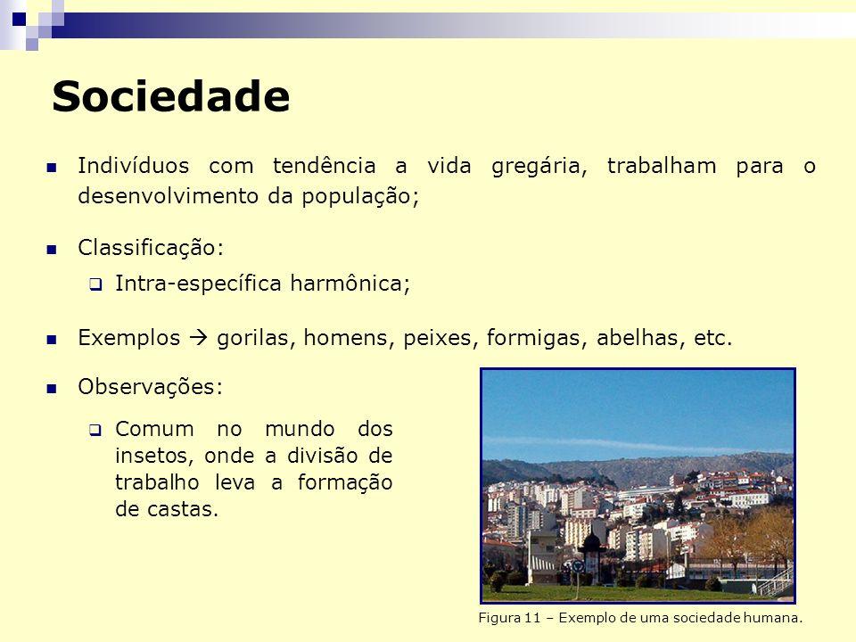 Sociedade Indivíduos com tendência a vida gregária, trabalham para o desenvolvimento da população; Classificação: Intra-específica harmônica; Exemplos