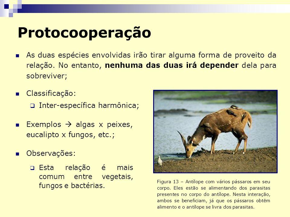 Protocooperação As duas espécies envolvidas irão tirar alguma forma de proveito da relação. No entanto, nenhuma das duas irá depender dela para sobrev