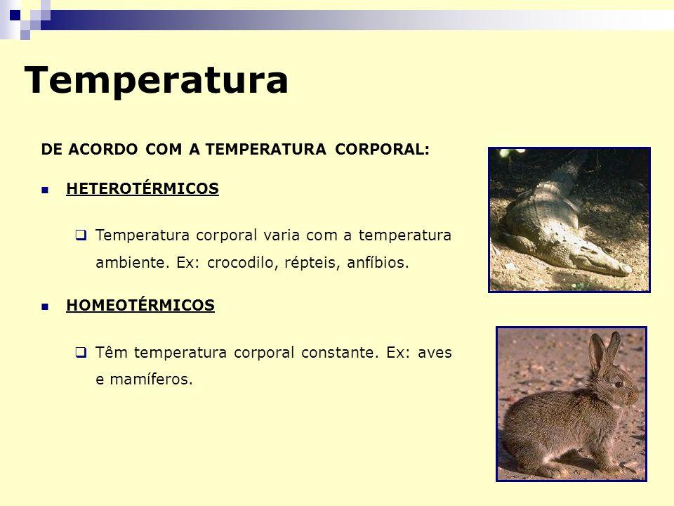 DE ACORDO COM A TEMPERATURA CORPORAL: HETEROTÉRMICOS Temperatura corporal varia com a temperatura ambiente. Ex: crocodilo, répteis, anfíbios. HOMEOTÉR