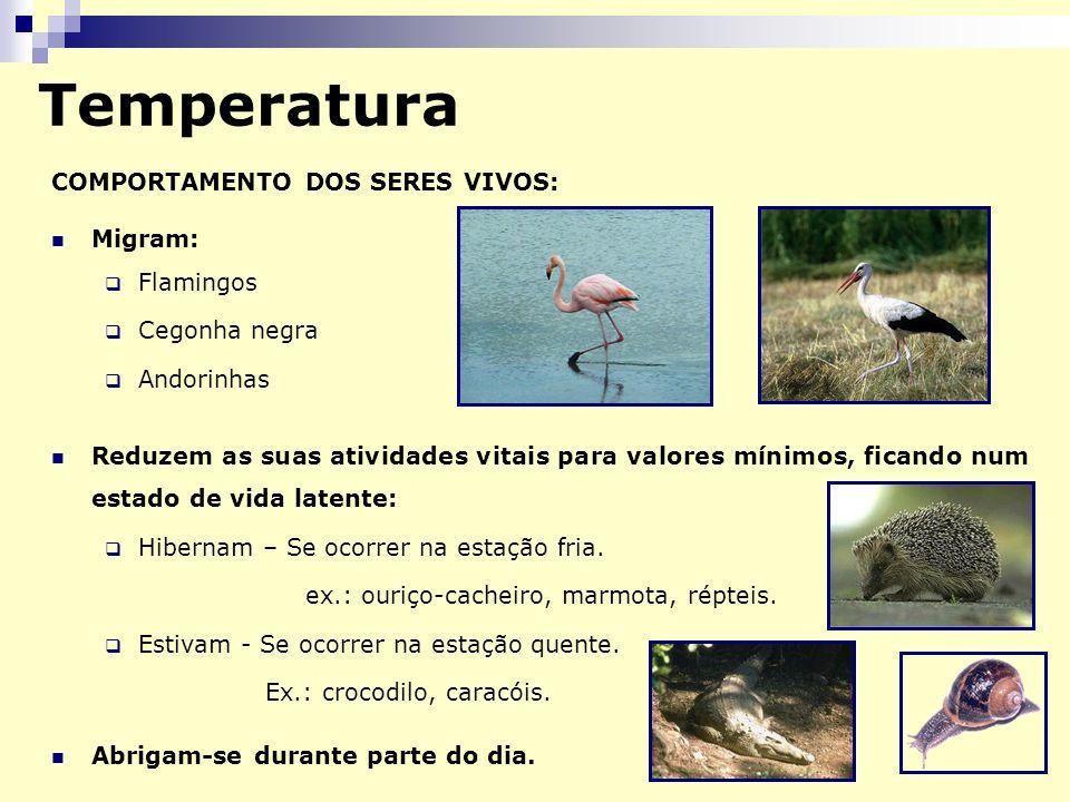 Temperatura COMPORTAMENTO DOS SERES VIVOS: Migram: Flamingos Cegonha negra Andorinhas Reduzem as suas atividades vitais para valores mínimos, ficando