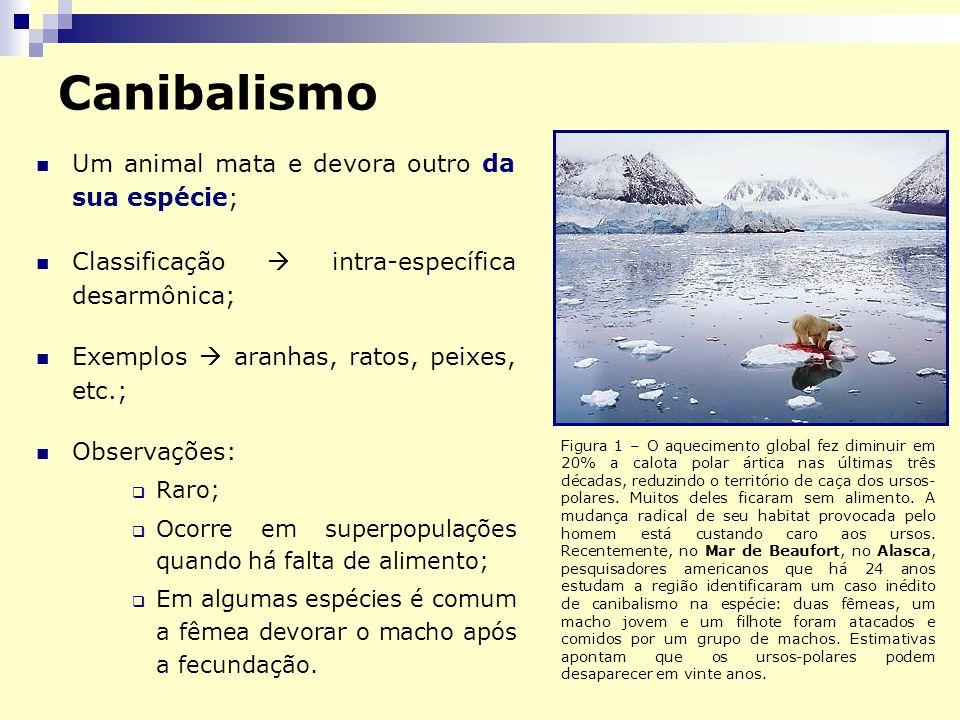 Canibalismo Um animal mata e devora outro da sua espécie; Classificação intra-específica desarmônica; Exemplos aranhas, ratos, peixes, etc.; Observaçõ