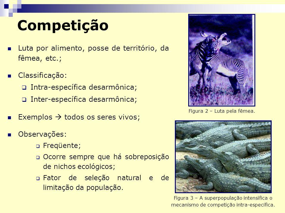 Competição Luta por alimento, posse de território, da fêmea, etc.; Classificação: Intra-específica desarmônica; Inter-específica desarmônica; Exemplos