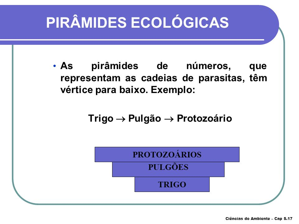 PIRÂMIDES ECOLÓGICAS As pirâmides que representam as cadeias de predadores têm vértice sempre para cima. Exemplo: Capim Gafanhotos Pássaros Raposas CA