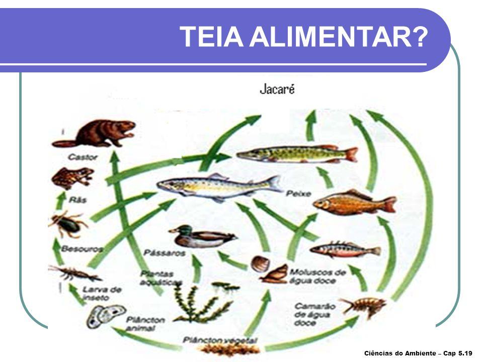 Entrelaçamento de cadeias alimentares. TEIA ALIMENTAR? Ciências do Ambiente – Cap 5.18