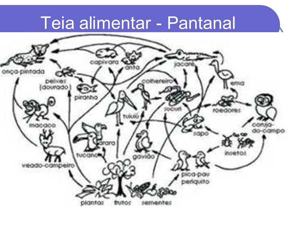 COMP. BIÓTICO (BIOCENOSE) 1. PRODUTORES: seres autótrofos, responsáveis pela produção do alimento através de foto / quimiossíntese (vegetais clorofila