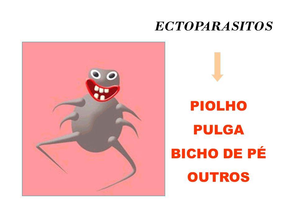 ECTOPARASITOS PIOLHO PULGA BICHO DE PÉ OUTROS