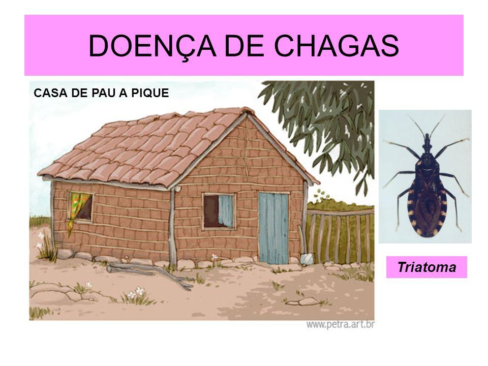 DOENÇA DE CHAGAS CASA DE PAU A PIQUE Triatoma