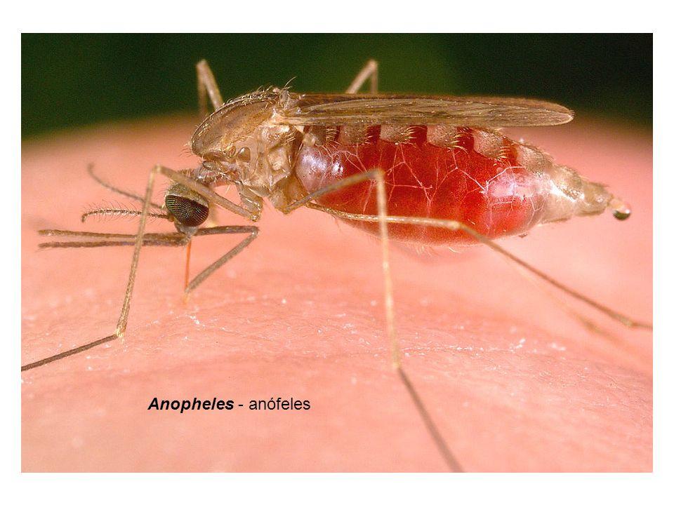 MALÁRIA - profilaxia Anopheles - anófeles 1.Inseticida, 2.