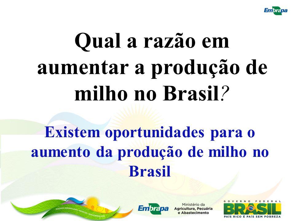 Existem oportunidades para o aumento da produção de milho no Brasil Qual a razão em aumentar a produção de milho no Brasil?