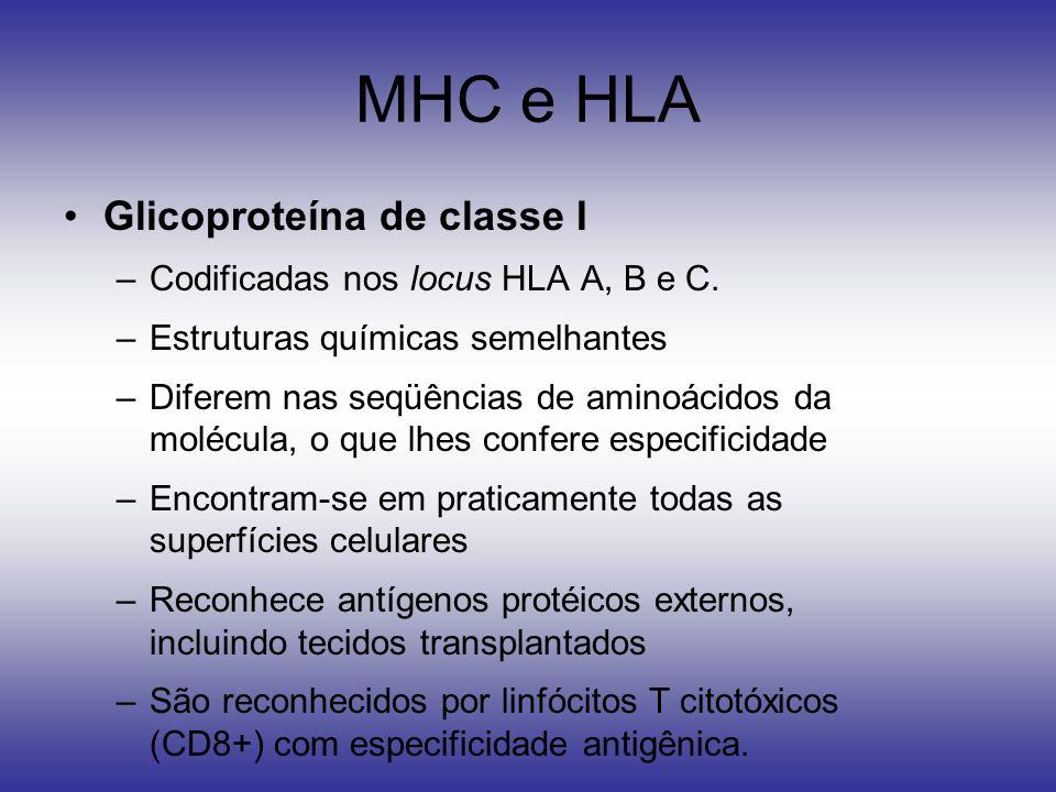 MHC e HLA Glicoproteína de classe I –Codificadas nos locus HLA A, B e C. –Estruturas químicas semelhantes –Diferem nas seqüências de aminoácidos da mo