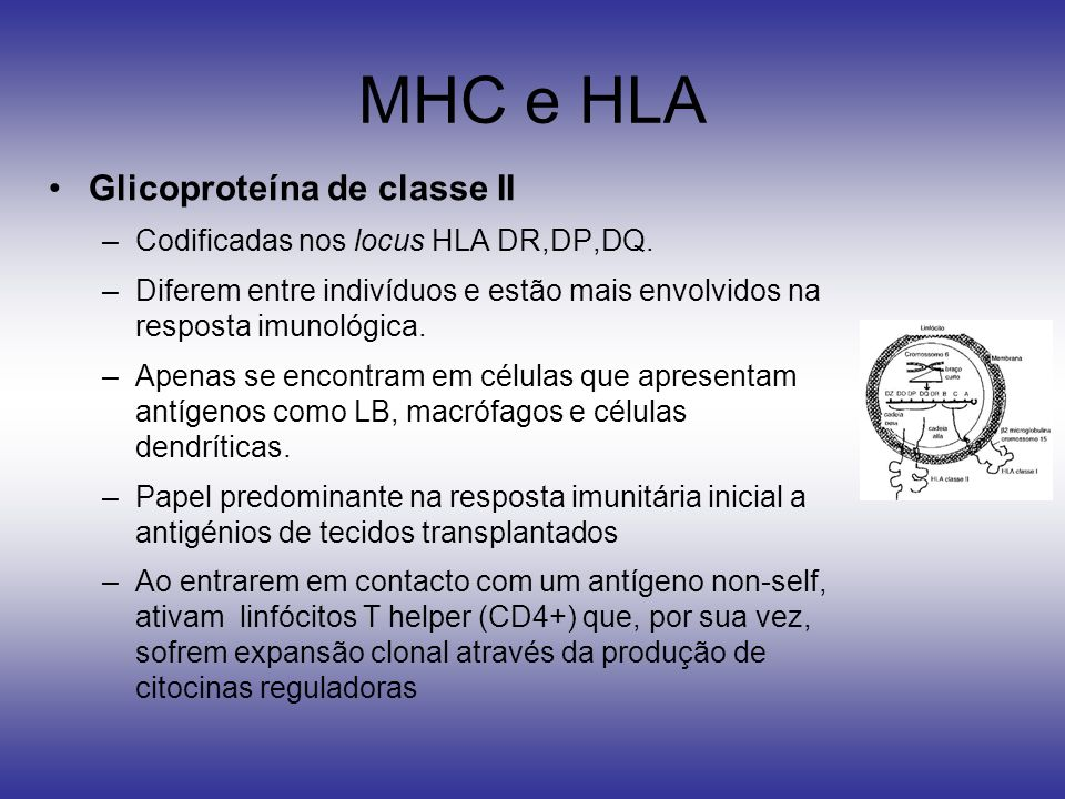 MHC e HLA Glicoproteína de classe II –Codificadas nos locus HLA DR,DP,DQ. –Diferem entre indivíduos e estão mais envolvidos na resposta imunológica. –