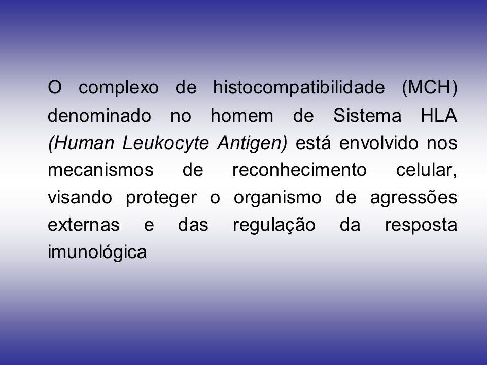 O complexo de histocompatibilidade (MCH) denominado no homem de Sistema HLA (Human Leukocyte Antigen) está envolvido nos mecanismos de reconhecimento