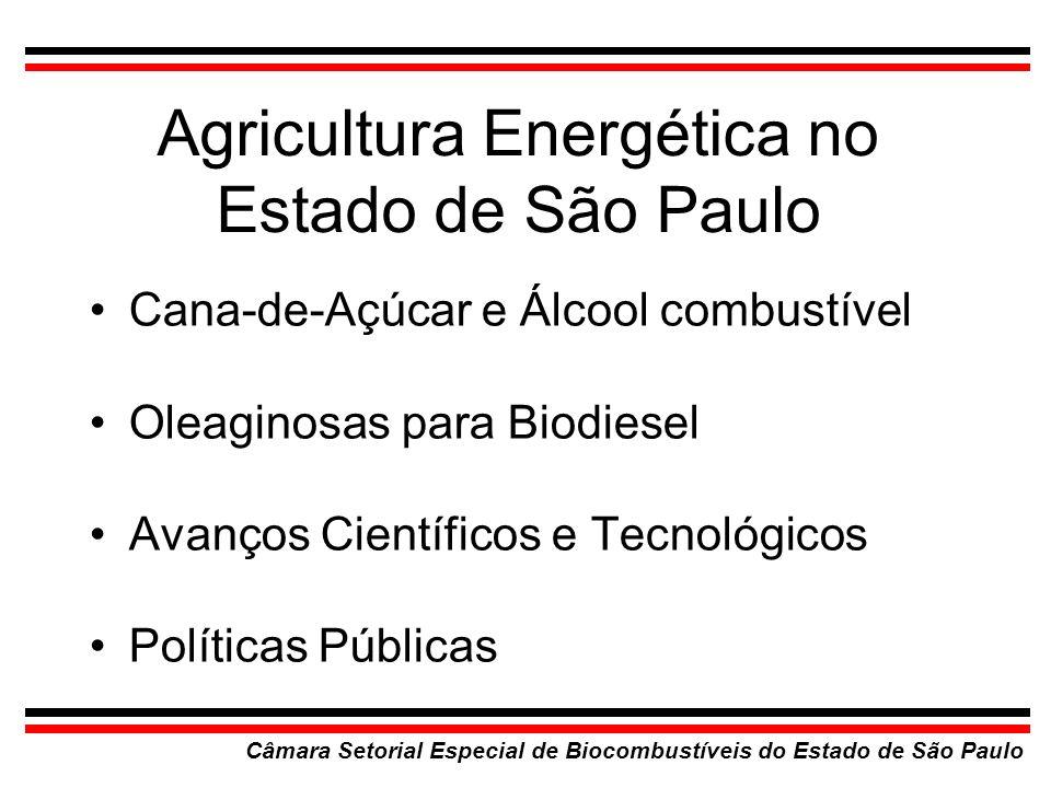 Cana-de-Açúcar e Álcool combustível Câmara Setorial Especial de Biocombustíveis do Estado de São Paulo BrasilSão Paulo 307 Usinas128 Usinas 4,5 milhões/hectares3,38 milhões/hectares 1 milhão de empregos diretos 600 mil empregos diretos Álcool no Brasil, Capacidade Instalada: 17 milhões m 3 /ano Produção de Etanol (atual): 15,5 milhões de m 3 /ano São Paulo: 60% da Produção Nacional, 35% do PIB Cenário atual: crescimento e construção de 40 novas usinas