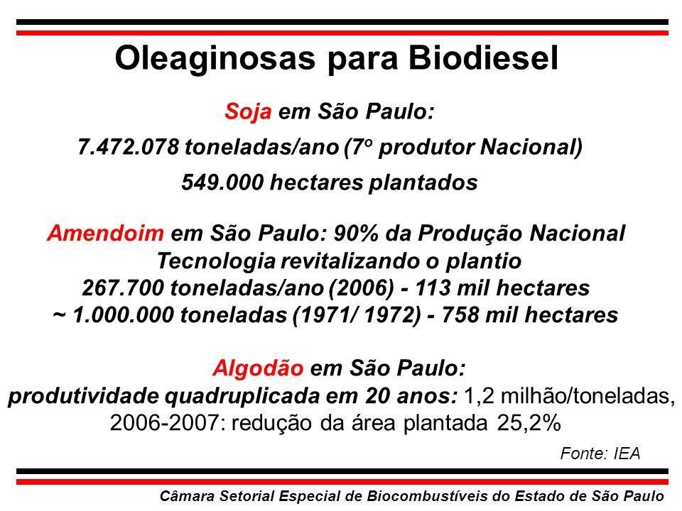 Oleaginosas para Biodiesel Câmara Setorial Especial de Biocombustíveis do Estado de São Paulo Soja em São Paulo: 7.472.078 toneladas/ano (7 o produtor