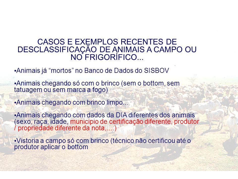 CASOS E EXEMPLOS RECENTES DE DESCLASSIFICAÇÃO DE ANIMAIS A CAMPO OU NO FRIGORÍFICO... Animais já mortos no Banco de Dados do SISBOV Animais chegando s