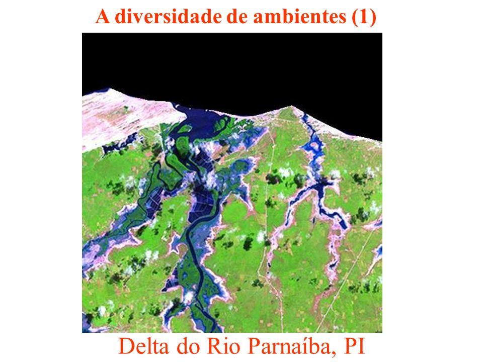 Delta do Rio Parnaíba, PI A diversidade de ambientes (1)