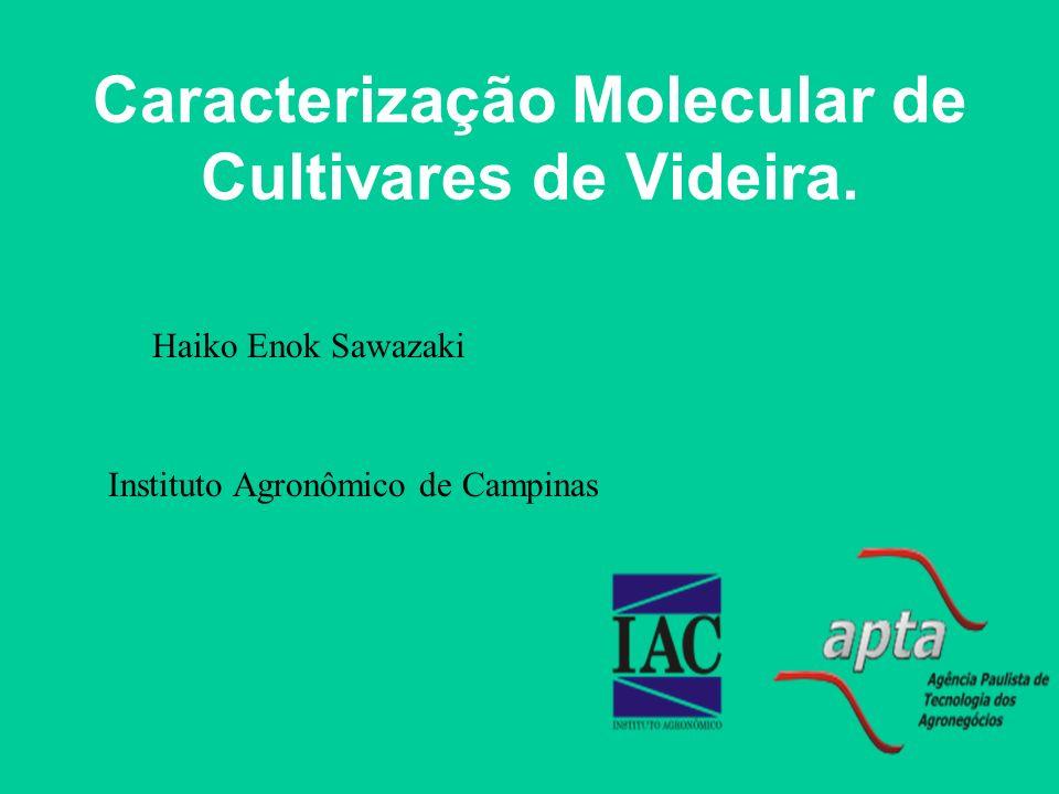 Caracterização Molecular de Cultivares de Videira. Instituto Agronômico de Campinas Haiko Enok Sawazaki