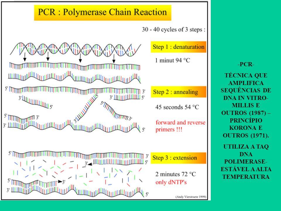 -PCR- TÉCNICA QUE AMPLIFICA SEQUÊNCIAS DE DNA IN VITRO- MILLIS E OUTROS (1987) – PRINCÍPIO KORONA E OUTROS (1971). UTILIZA A TAQ DNA POLIMERASE- ESTÁV
