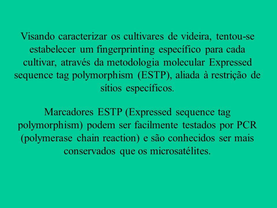Visando caracterizar os cultivares de videira, tentou-se estabelecer um fingerprinting específico para cada cultivar, através da metodologia molecular
