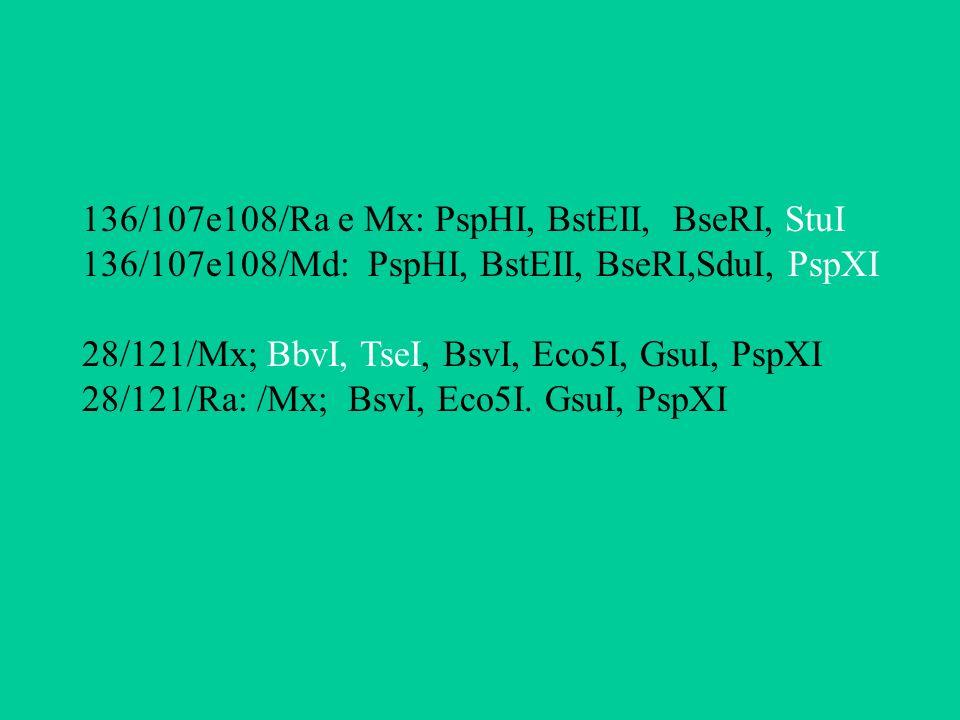 136/107e108/Ra e Mx: PspHI, BstEII, BseRI, StuI 136/107e108/Md: PspHI, BstEII, BseRI,SduI, PspXI 28/121/Mx; BbvI, TseI, BsvI, Eco5I, GsuI, PspXI 28/12