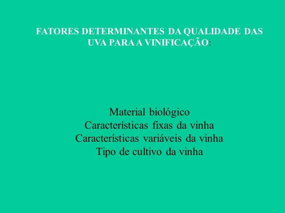 FATORES DETERMINANTES DA QUALIDADE DAS UVA PARA A VINIFICAÇÃO: Material biológico Características fixas da vinha Características variáveis da vinha Ti