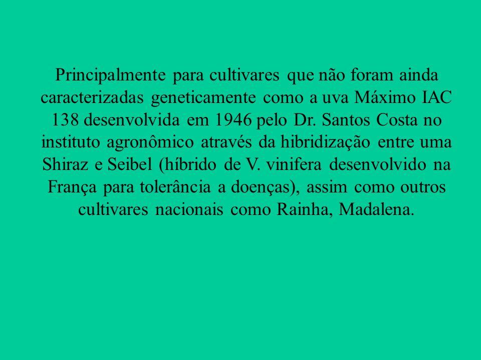 Principalmente para cultivares que não foram ainda caracterizadas geneticamente como a uva Máximo IAC 138 desenvolvida em 1946 pelo Dr. Santos Costa n