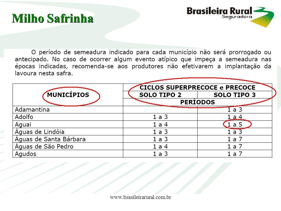 www.brasileirarural.com.br Milho Safrinha